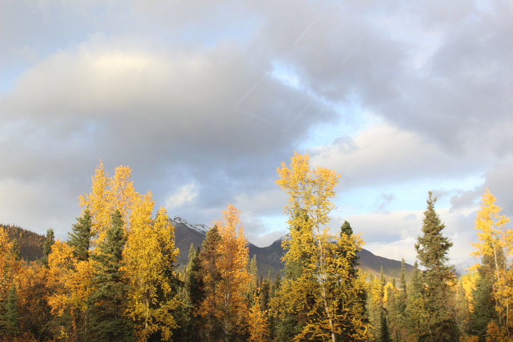 Alaska_Drive