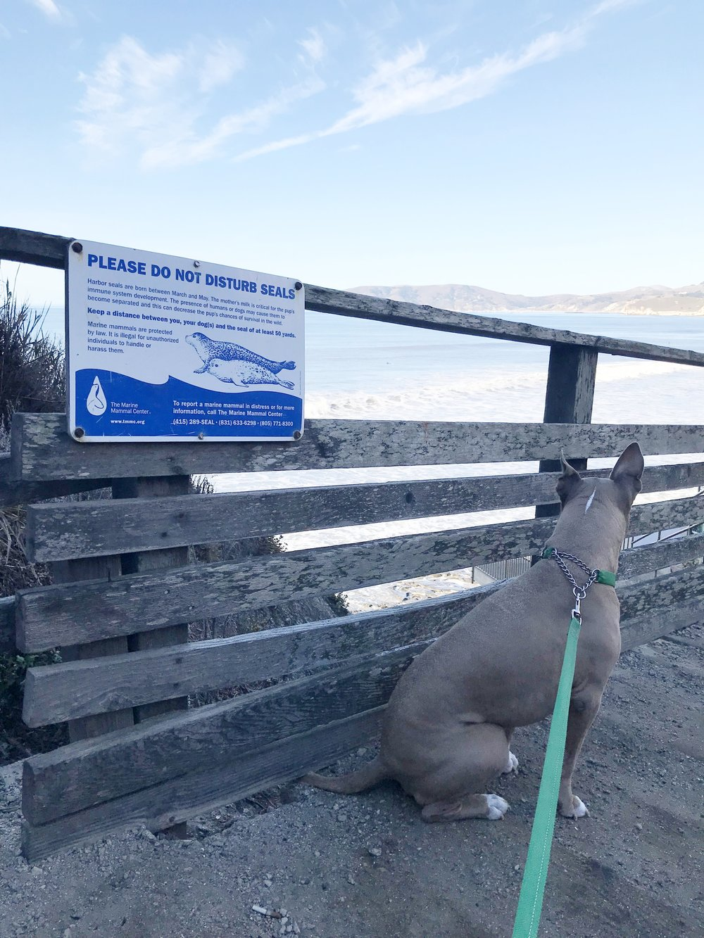 But Mom, I really WANT to disturb the seals!