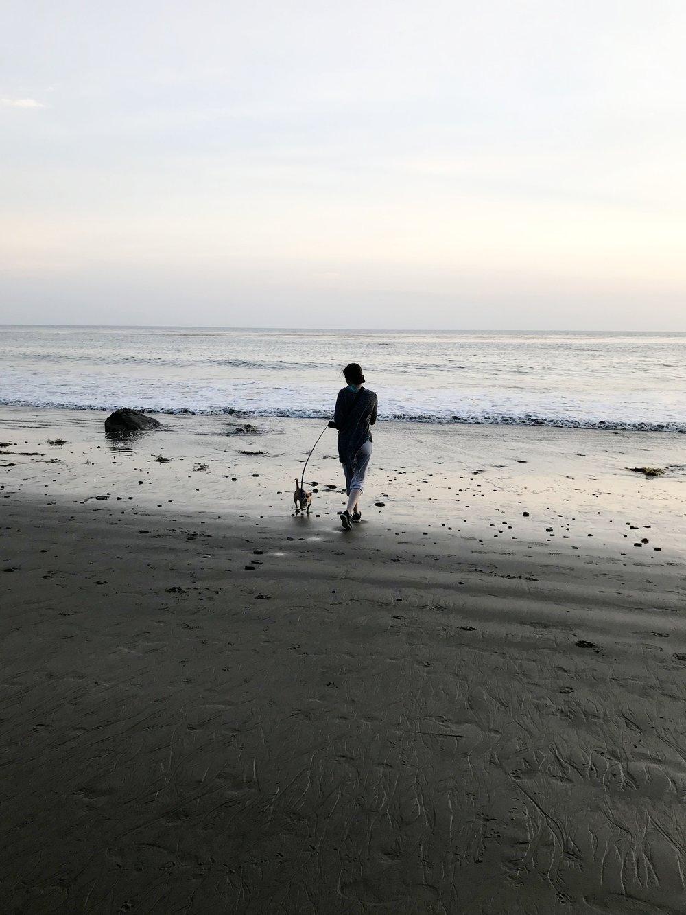 Beach_Stroll_Chiweenie