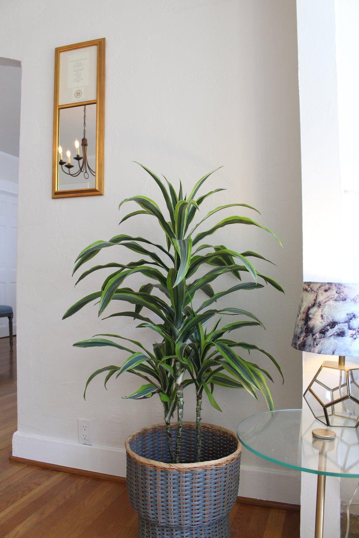 Home Tour_Plant