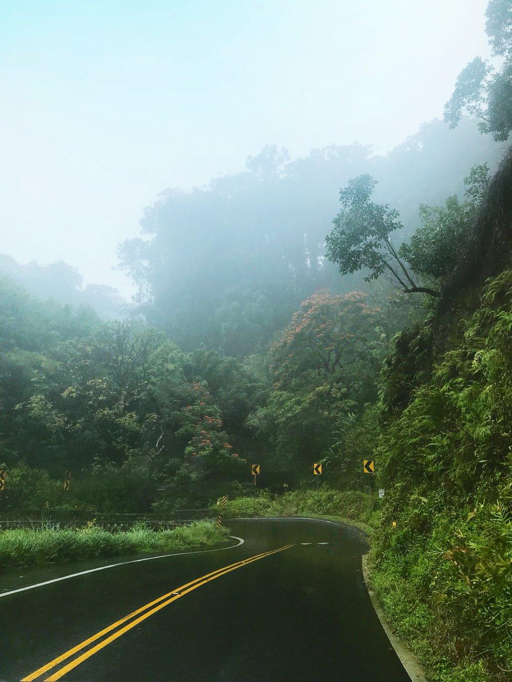 A glimpse of the jungle in the rain.