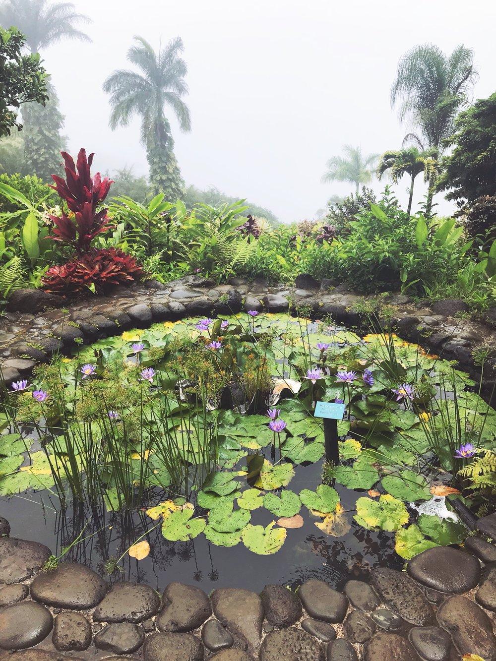 Garden_of_Eden_Lilly_Pond