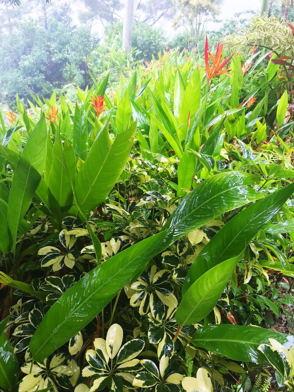 Garden_of_Eden_Plants