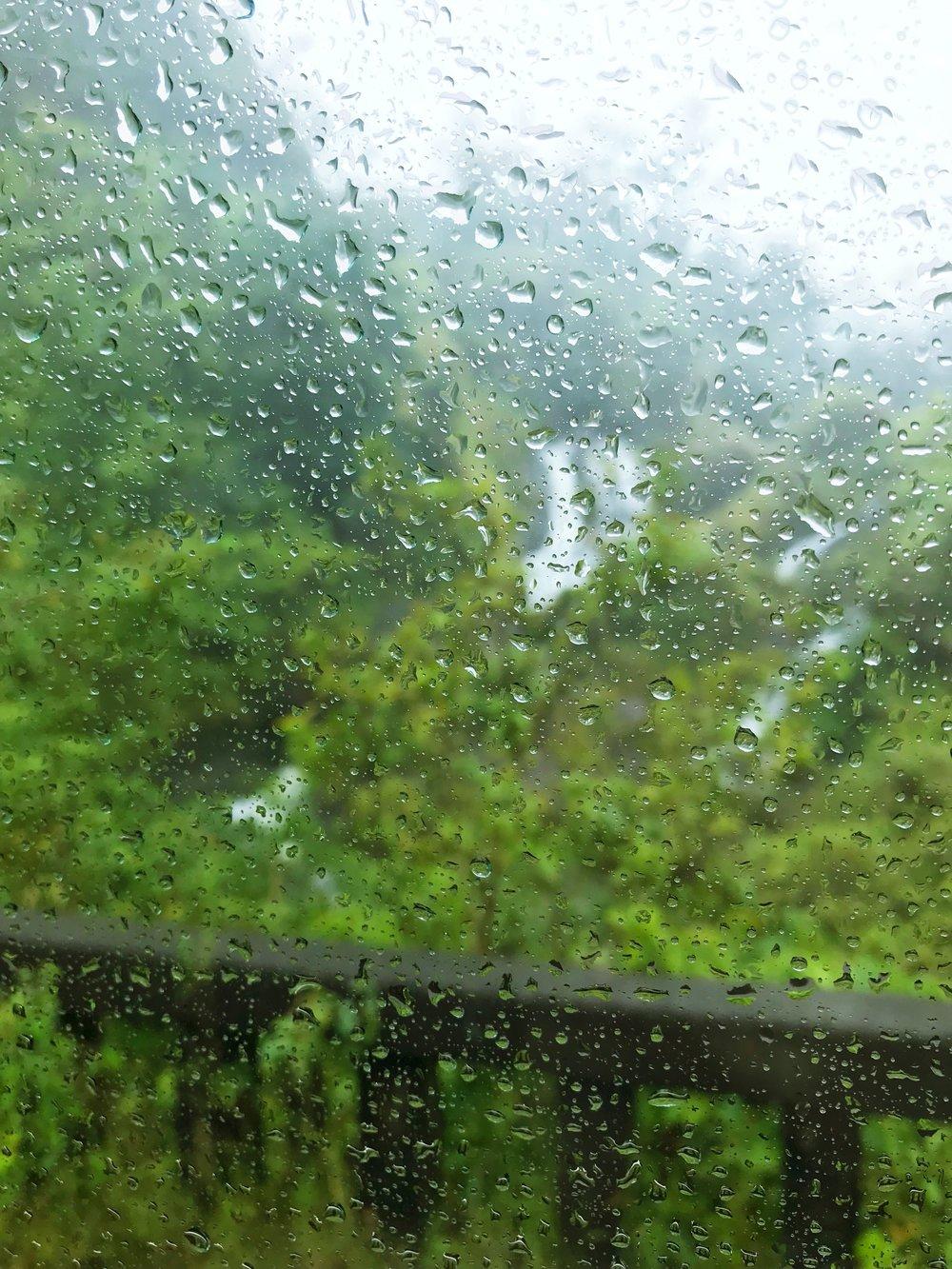 Rainy_Jungle