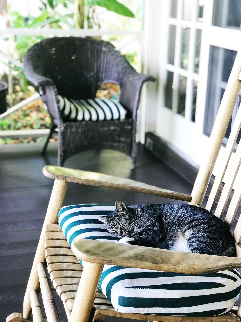 Kauai_Cat