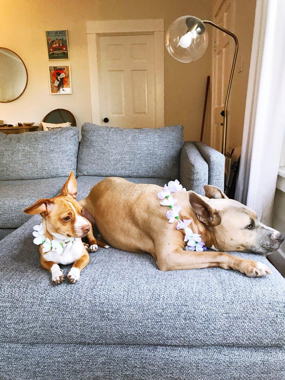 Dog_Leis