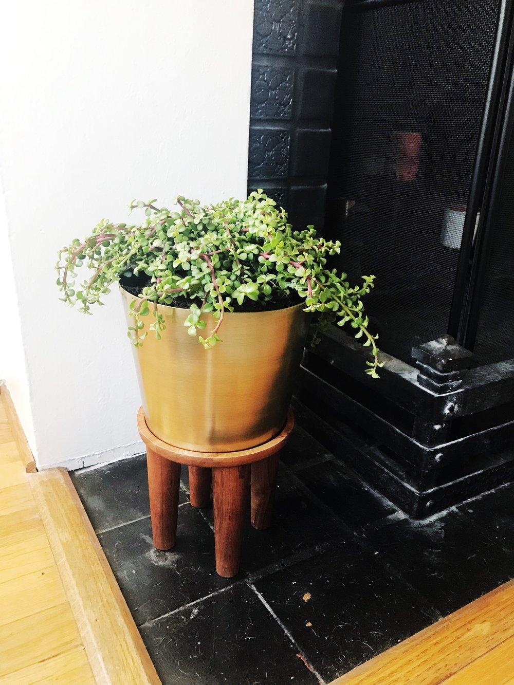 Indoor_Succulent