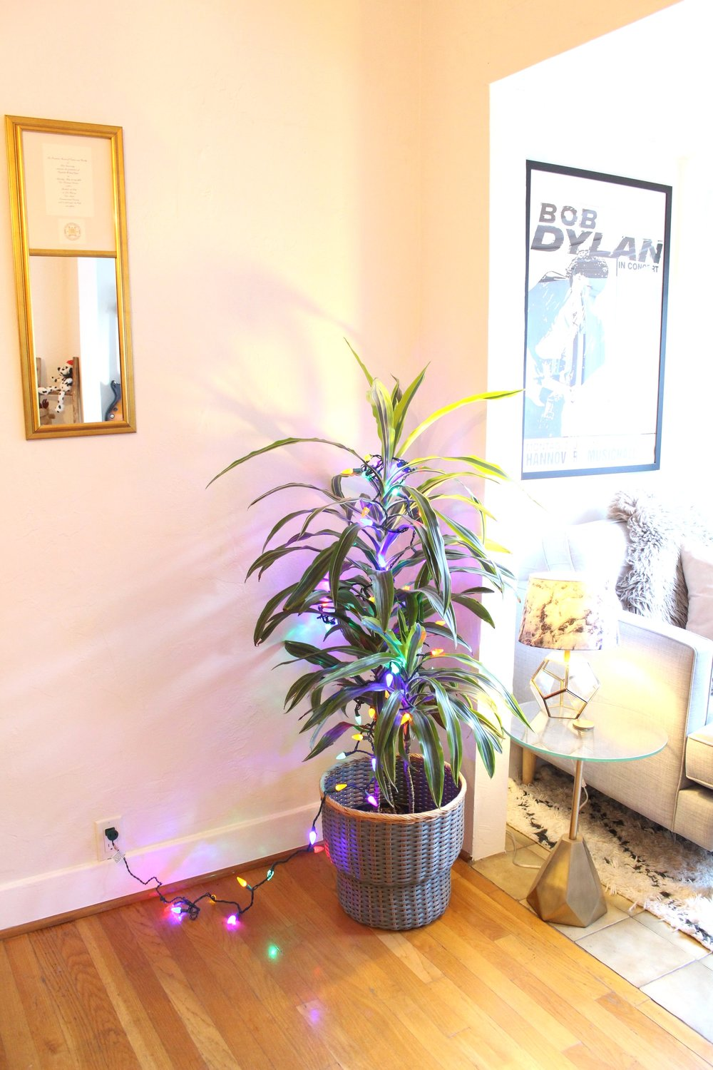 Christmas_Lights_Houseplant