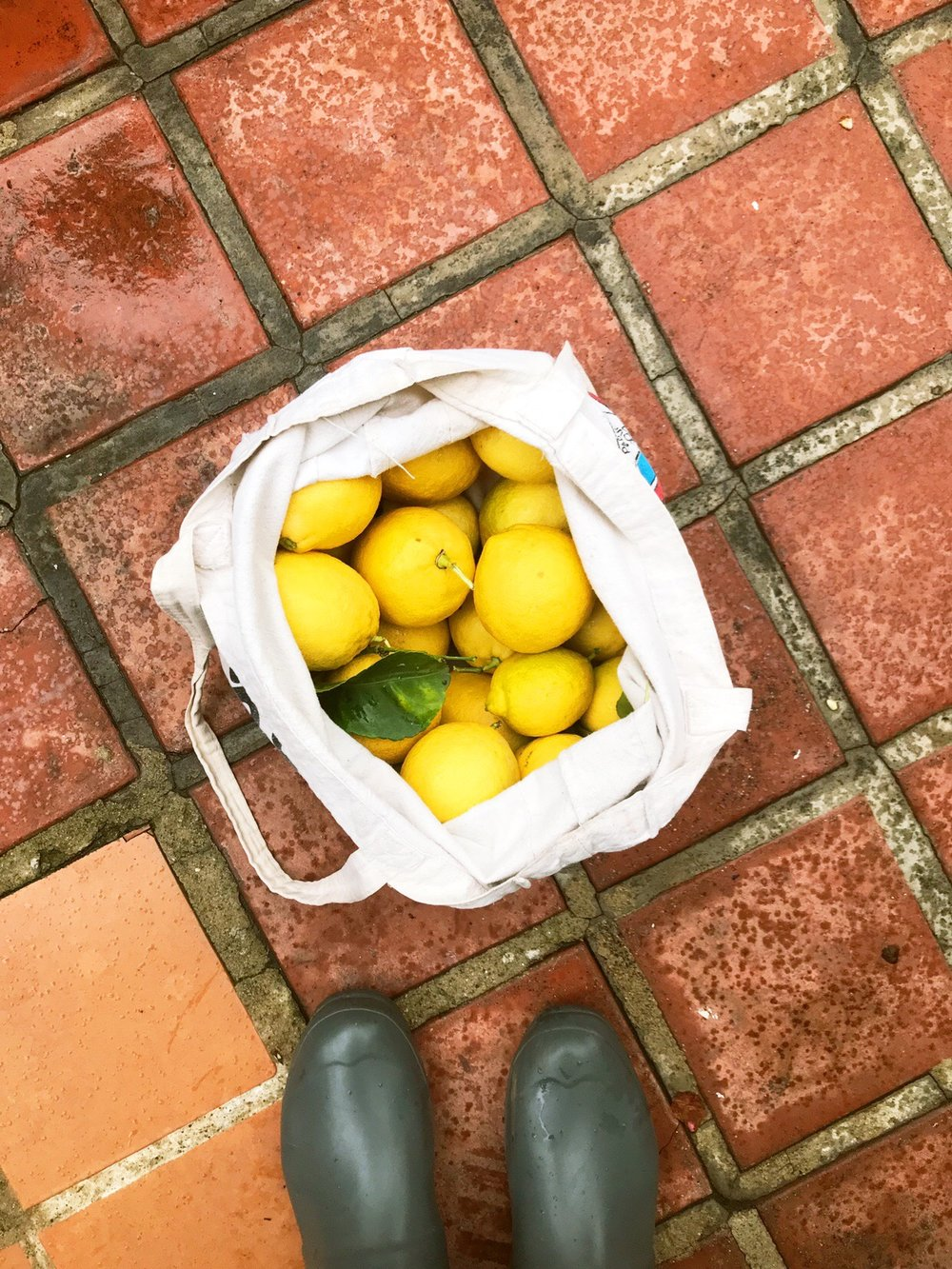 Lemon_Harvest.JPG