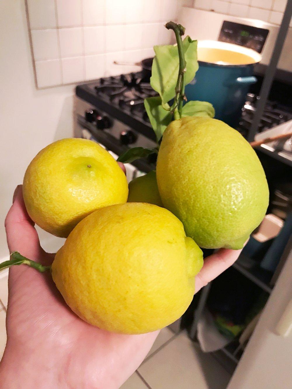 Kitchen_Lemons.JPG