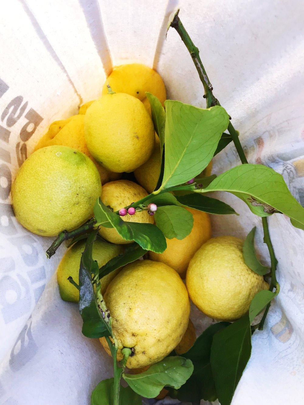 Lemon_Haul.JPG