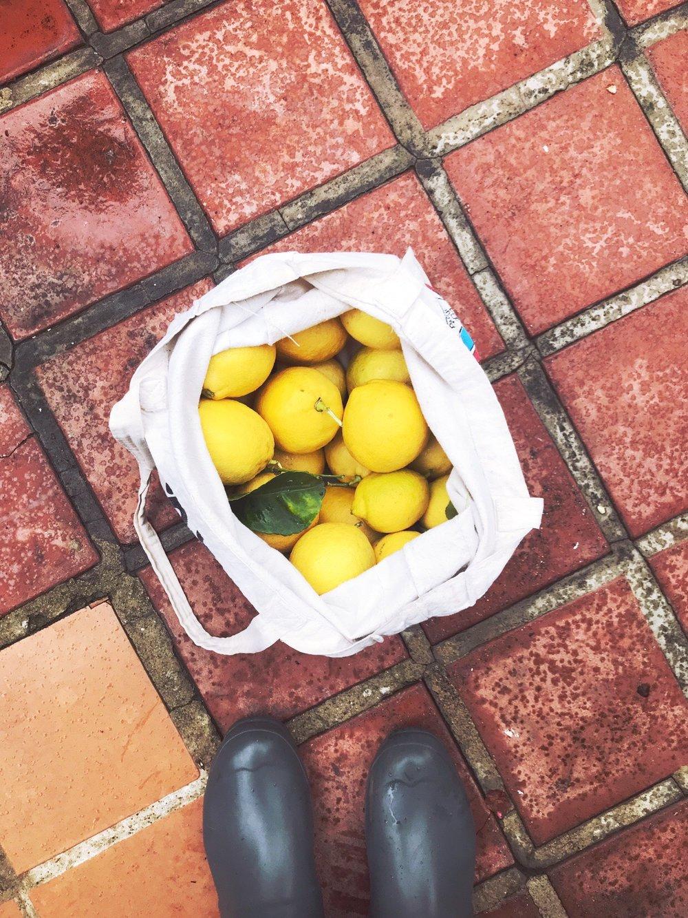 Sunkist_Lemons.JPG