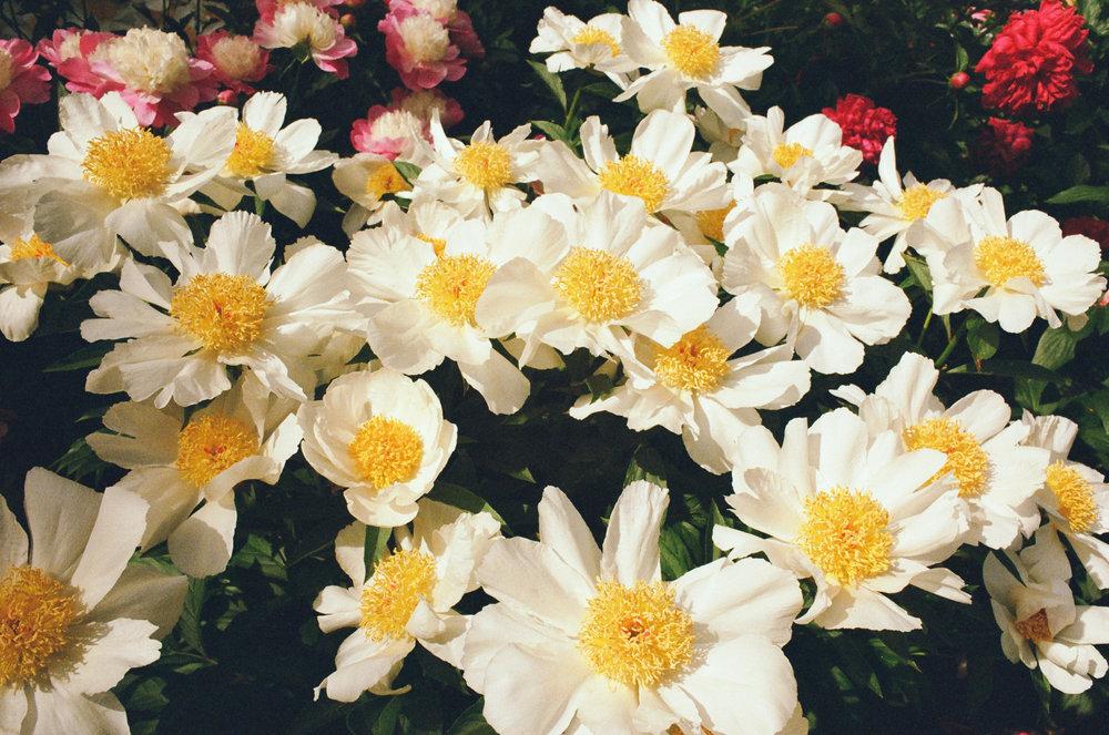 flowers35mm.jpg