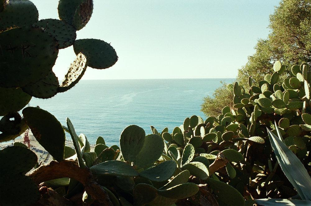 cactus35mm.jpg