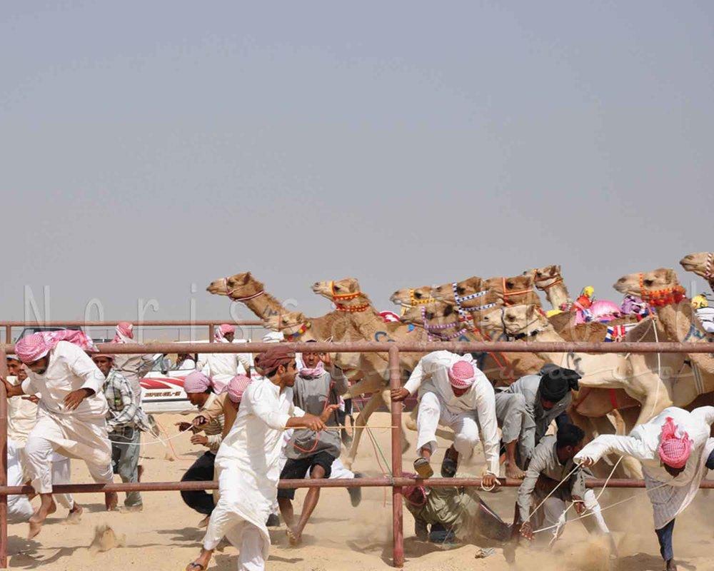 Kuwait-CamelRacing.jpg