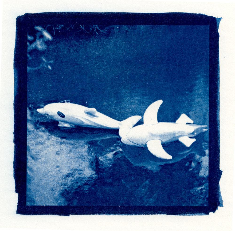 Cyanotype, 2013