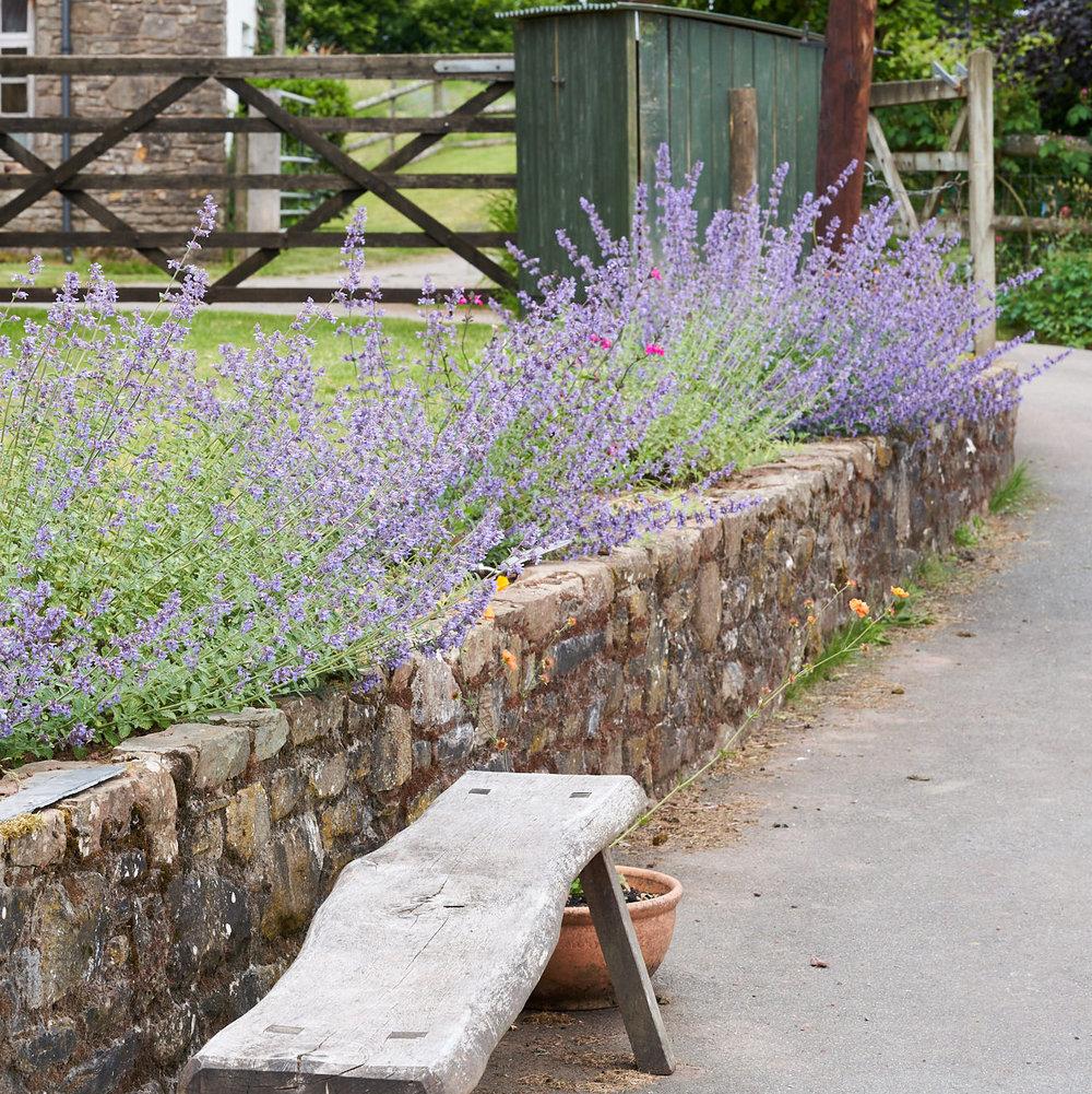 1-63-Lavender Farm 15.6.18 76.jpg