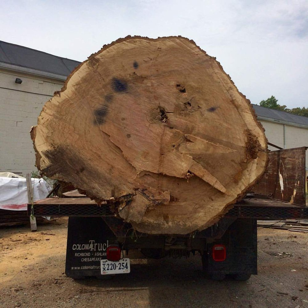 This white oak ain't no joke -