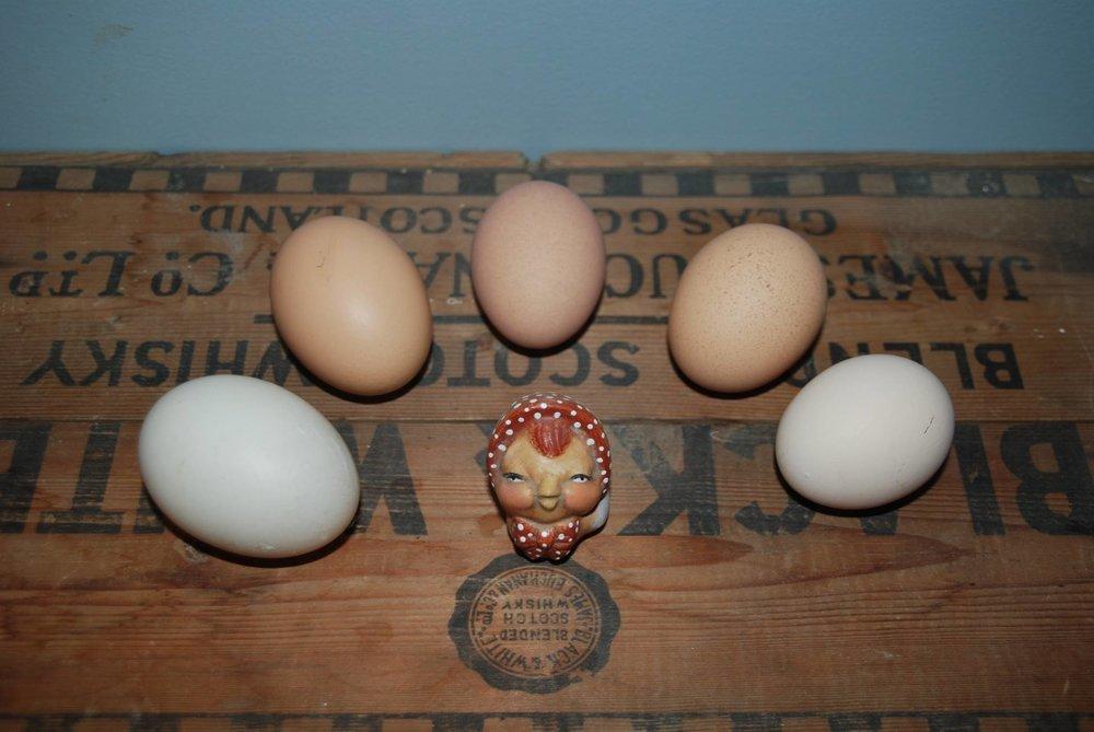 Eggs Havens Hill.jpg