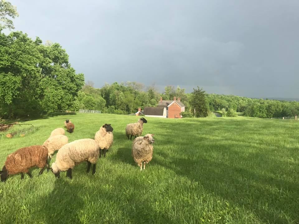 5.29.18a local historically significant homestead located in Mount Perry specializing in permaculture and the lost arts with emphasis on the stewardship of our land. - April Lovejoy.jpg