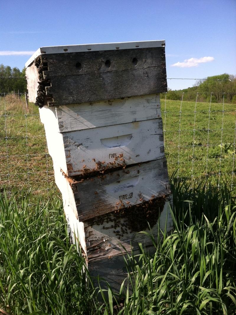 bee-hive-raw-honey-bee-barons.jpeg