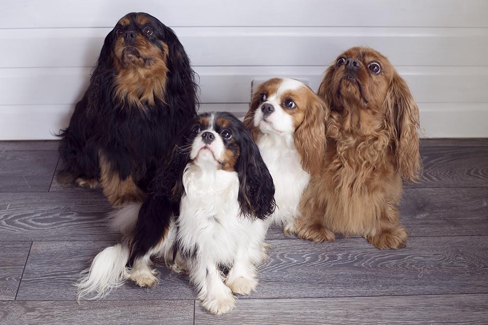Did someone say dog treats! -