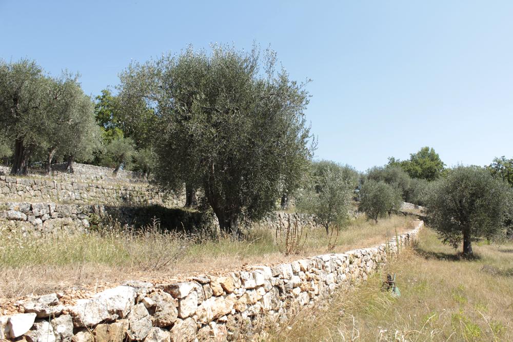 Oliveraie 8.jpg