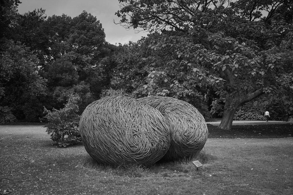 Tom Hare – Sophora seed