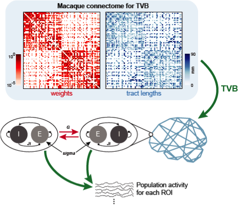 The Virtualized Macaque Brain (essentially a lot of hard work reduced into just two matrices) is used to specify connectivity of coupled neural mass models in TheVirtualBrain (TVB).