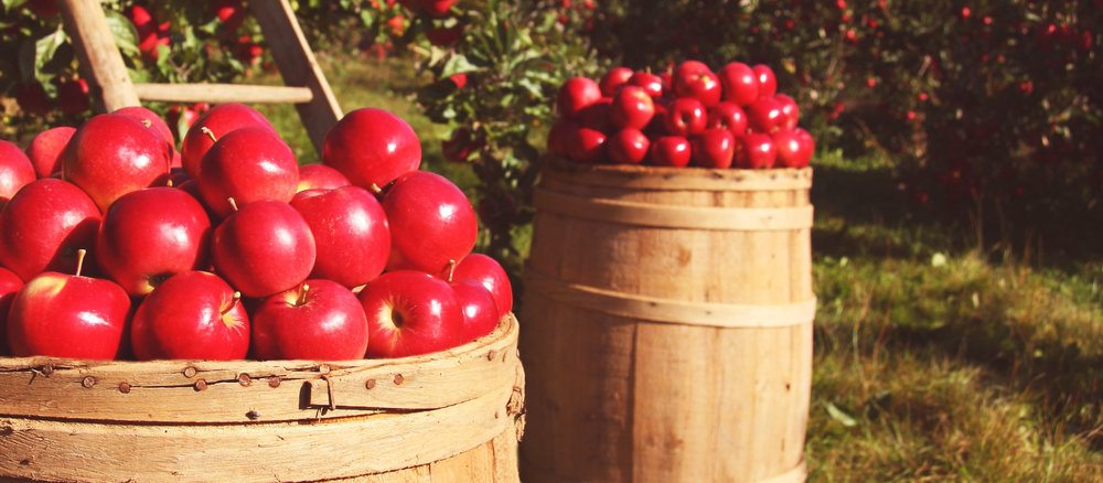 Season Finale! - It's the last day to enjoy apples & cobbler for the season! Come visit us at Five Fields Farm!Sunday, October 29th | 10am to 5pm