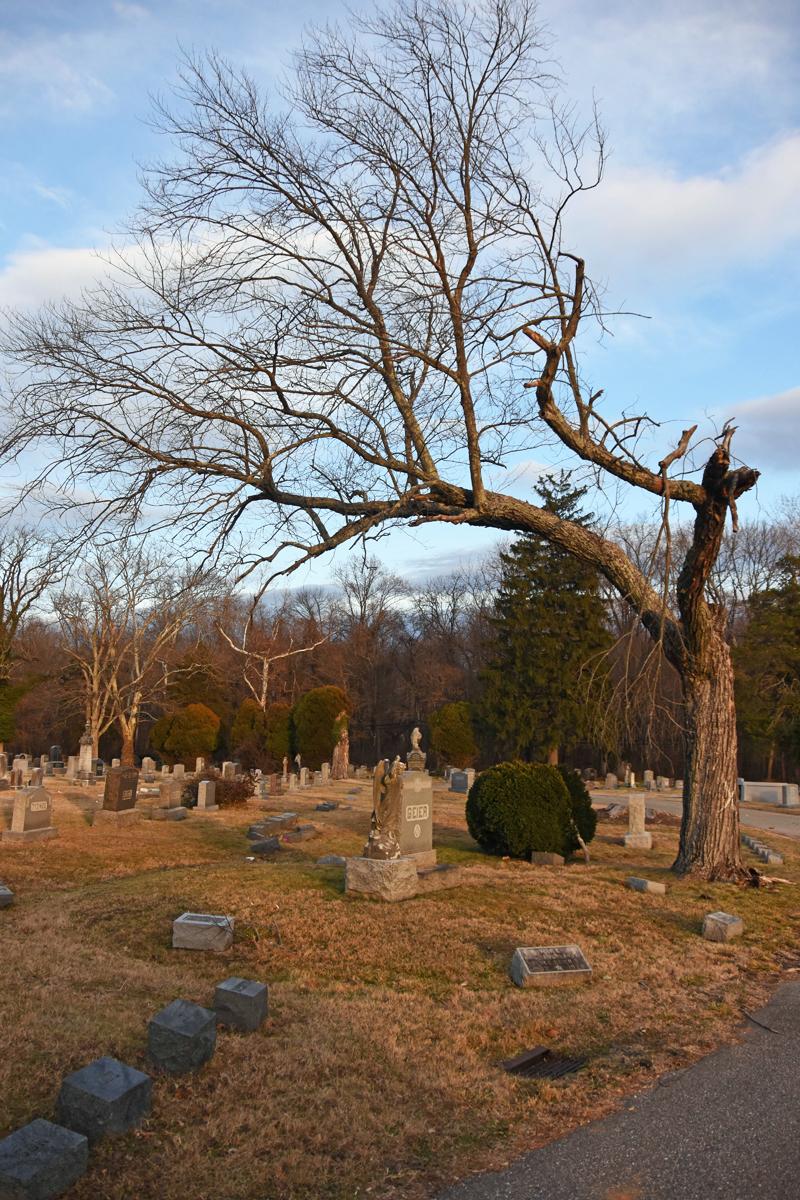 Tree V.jpg