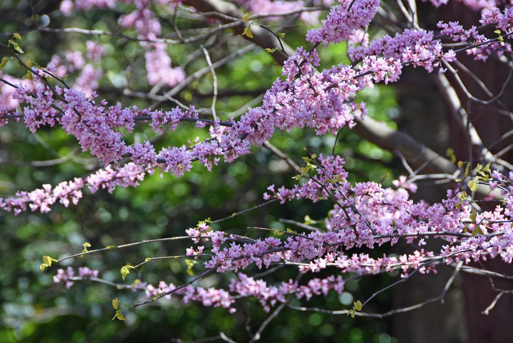 Sherwood Gardens in Baltimore