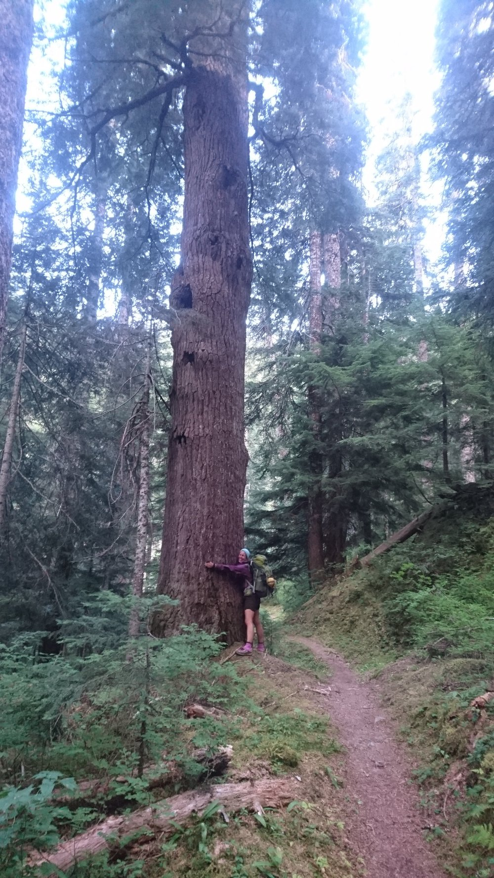Huge, magnificent trees! Such honor to be in their presence!