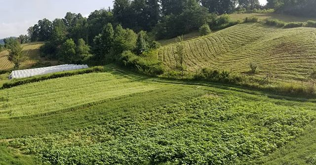 Olivette Farm got a haircut #farmlife#olivette#olivettefarm#olivettefarms#farmtotable#farmtofrontdoor#olivetteriverside#asheville#mountainliving#frenchbroadriver#