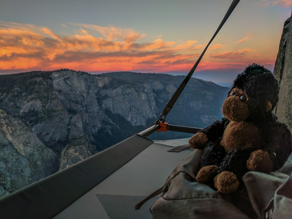 My climbing companion Congo enjoying the sunrise near the top of El Cap