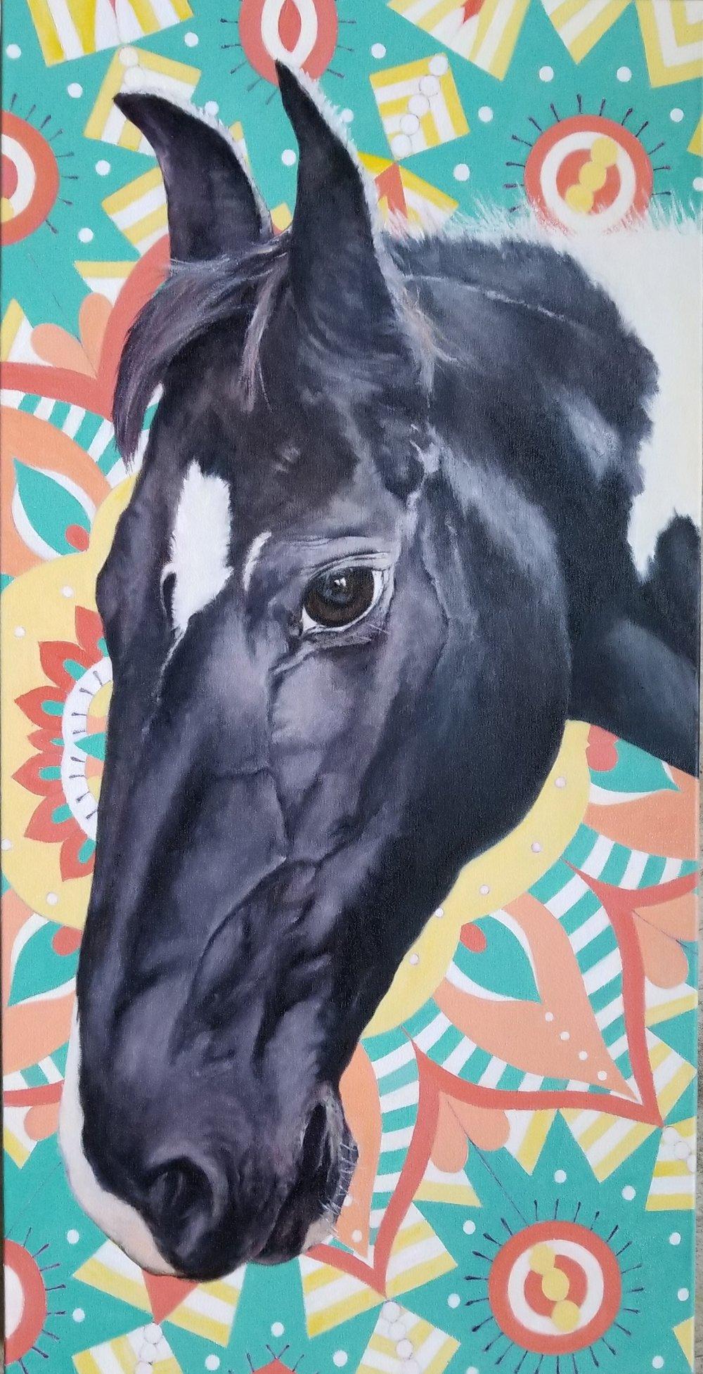 """Rae Rae"" A Marwari Filly at Kentucky Horse Park in Lexington, KY"