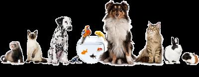 durango-pet-sitting-logo.png