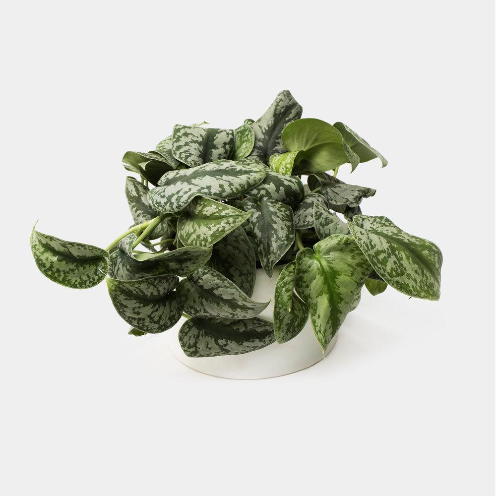Plants -