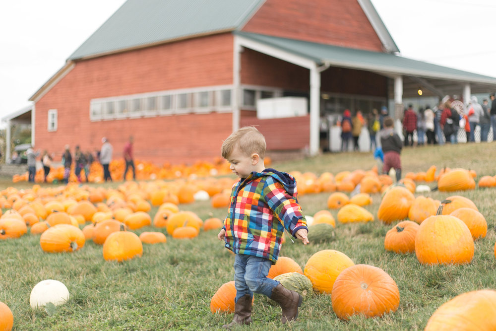 Bob's  Corn Family Photos at the Pumpkin Patch | Chelsea Macor Photography-21.jpg
