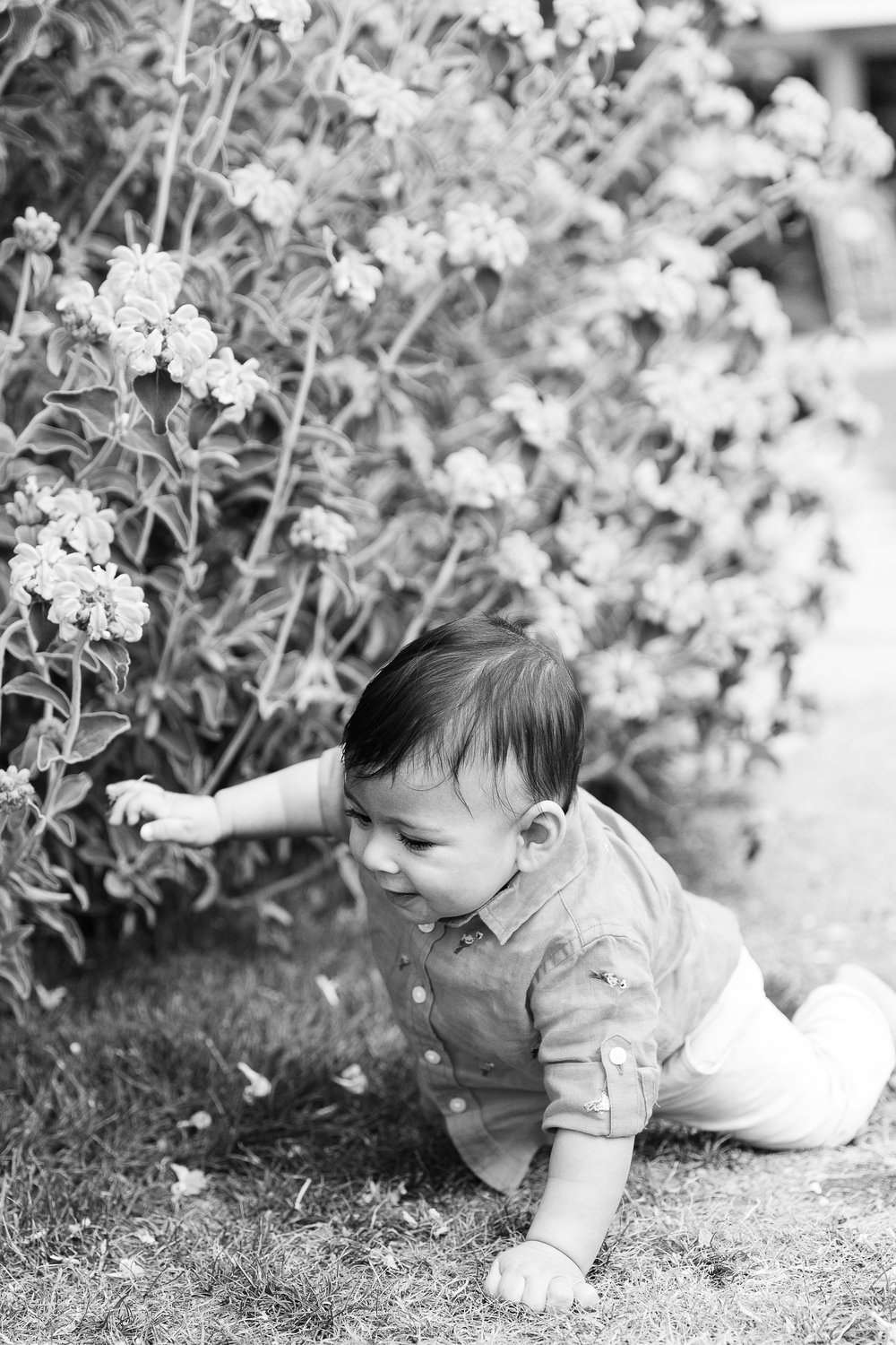 Family photos in the Bellevue Botanical Garden Seattle WA Chelsea Macor Photography-14.jpg