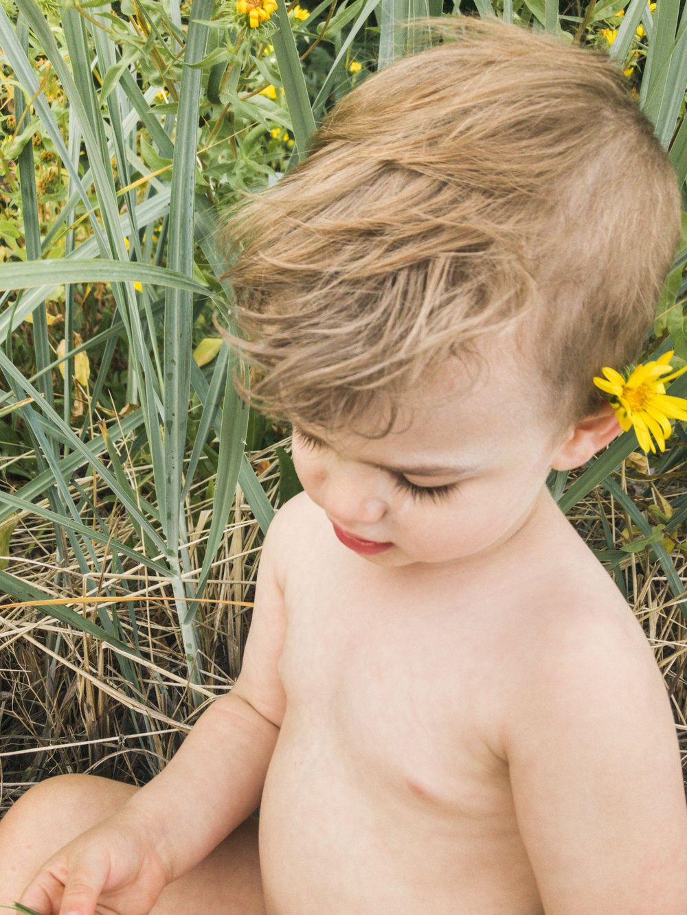 Rufus in the Daisies, Natural Light Photography Seattle Wa Lifestyle Family and Toddler Children Photos by Chelsea Macor Photograhy-2.jpg