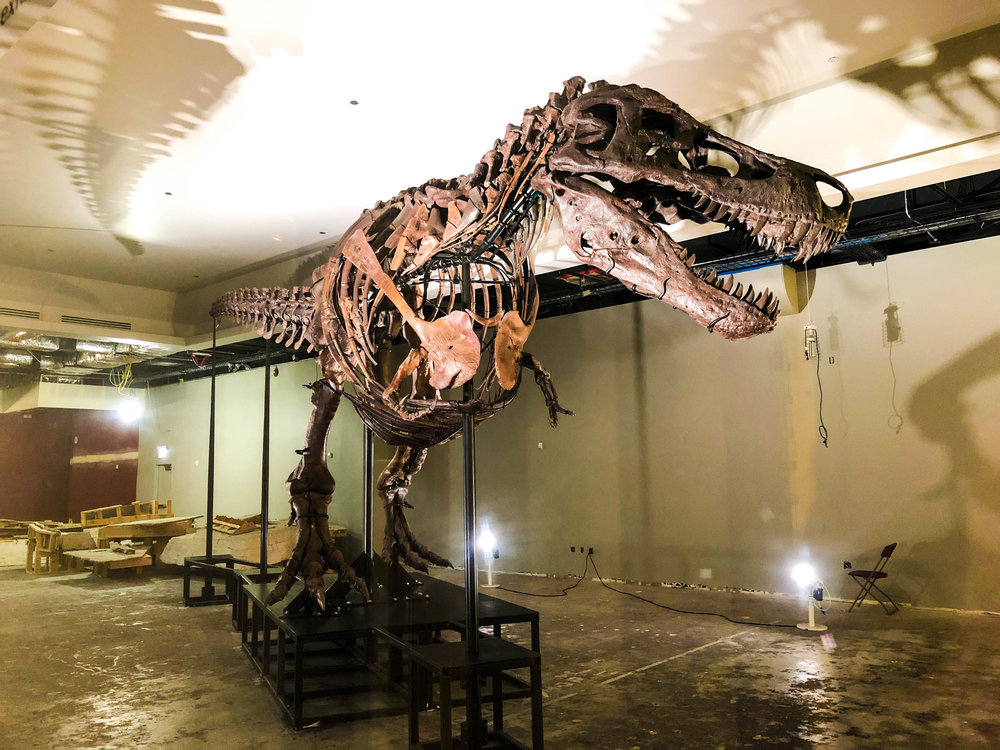 T-Rex Sue. The museum is currently building a new exhibit room around Sue.