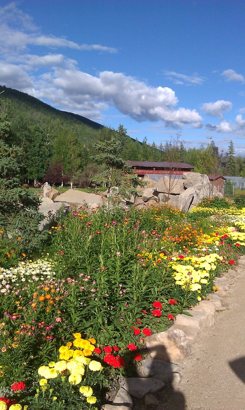 Chena hot springs in full bloom chena hot springs chena flowers mightylinksfo