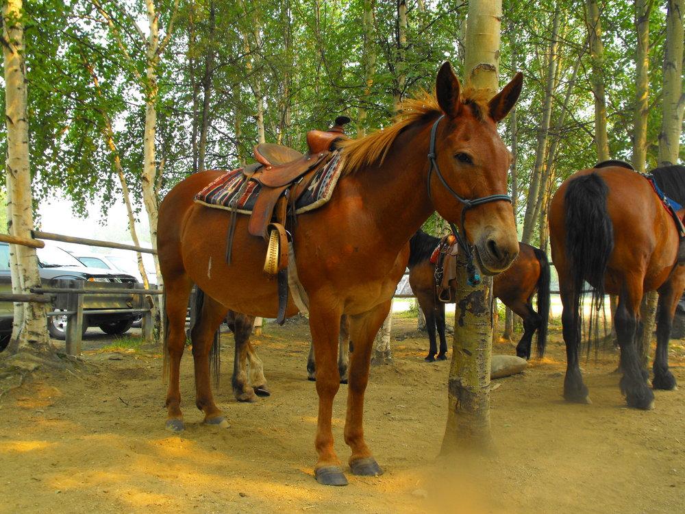 Horses -