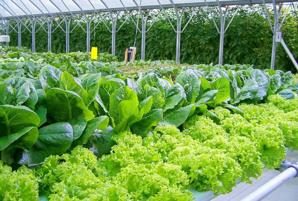 Chena Fresh Gardens -