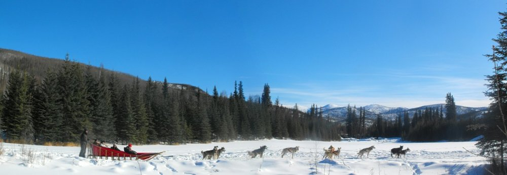 CHENA KENNEL - Experience Year-Round