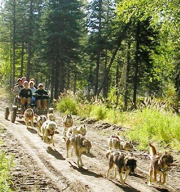 Dog Cart Rides