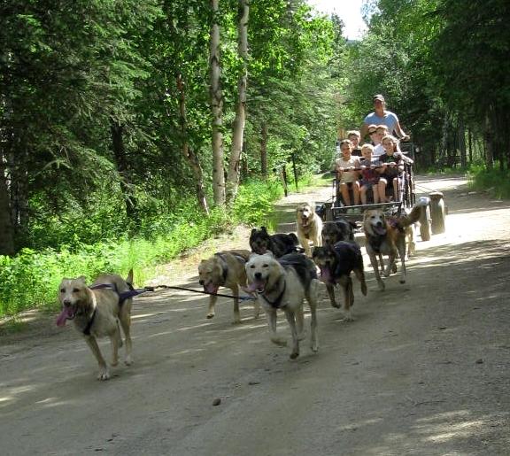 la summer Chena cart ride.jpg