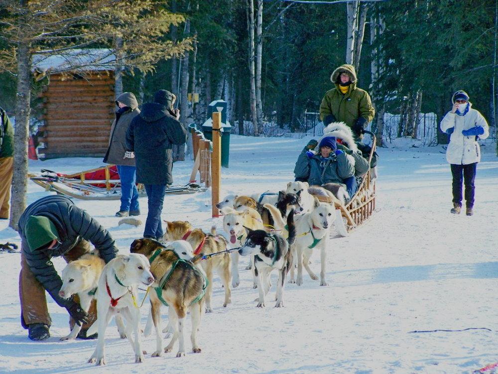 2winter getting ready dog sled ride (2).jpeg