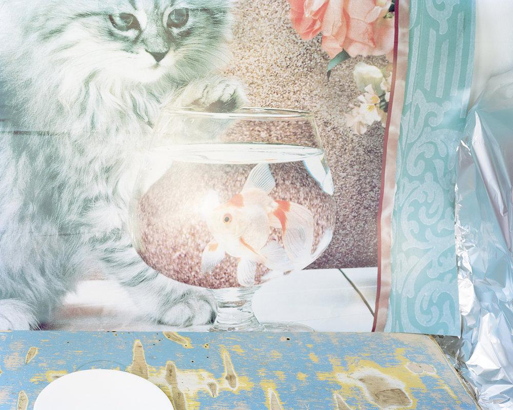 Svetlana Bailey,  cat , 2016